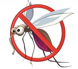 foto zanzare