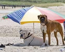 Cani in spiaggia con ombrelloni