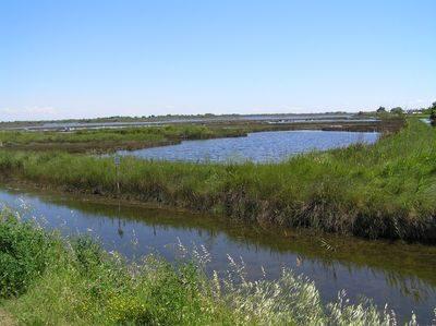 immagine della laguna di Cavallino
